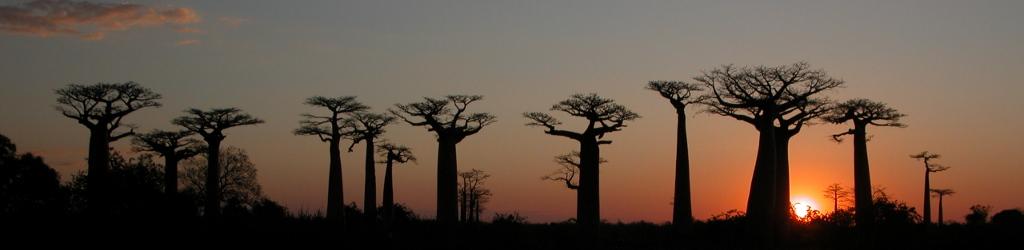 Madagascar2.JPG